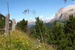 Südtirol mit Kinderbetreuung