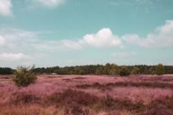 Lüneburger Heide- August